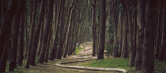 wood-snake_banner